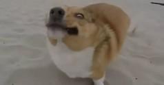 Kompilacja psich niepowodzeń