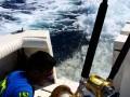 Lew morski postanowił wpaść na rybę