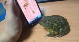 Żaba też gra w Ant Crusher