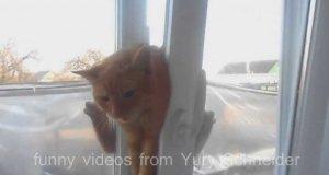 Kot utknął w uchylonym oknie