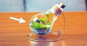 Wieczne terrarium