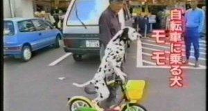 Pies na rowerze