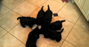 6 psów w pełnej synchronizacji