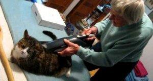 I weź zostaw kota u babci
