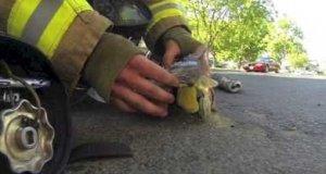Strażak i mały kotek