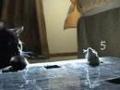 Gra w kotka i myszkę