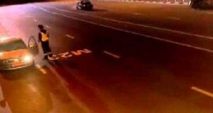 Atak wilków na autostradzie
