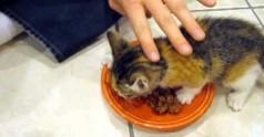 Kot broniący swojego jedzenia
