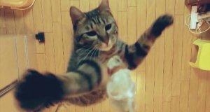 Kot, który skacze pod sam sufit
