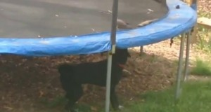 O gołębiu, który nie umiał skakać na trampolinie