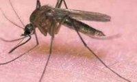 Piosenka o komarze