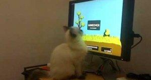 Kociak gra w Duck Hunt