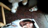 Polski kot i Justin Bieber
