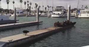 Pies robi porządek na molo