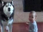 Husky śpiewa z dzieckiem