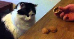 Kot gra w zgadywankę