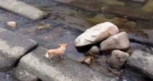 Pies i zabawa piłeczką