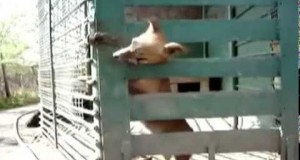 Psi mistrz ucieczek
