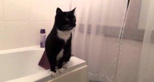 Kot przy lustrze