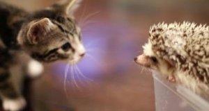 Kotek spotyka jeżyka
