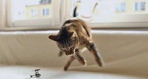 Koty kontra zdalnie sterowany helikopter