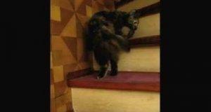 Kot tańczący walca