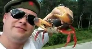 Słodka zemsta kraba