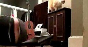 Masz w domu kota?