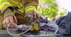 Strażak uratował kociaka po pożarze