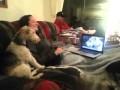 Psy rozmawiają przez Skype