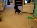 Pies vs. Wuwuzela