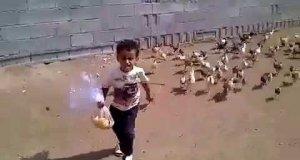 Chłopiec i stado kurczaków