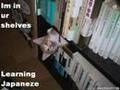 Zdjęcia kotów