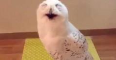 Śmiech sowy