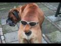 Śmieszne psy i koty