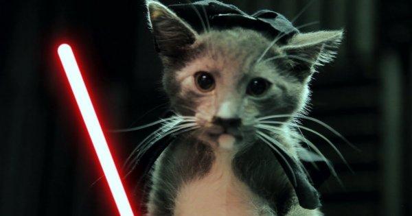 Gwiezdne wojny z kotami