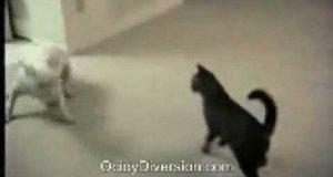 Zwariowany pies
