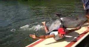 Zboczony delfin