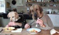 Dwa psy w ruchliwej restauracji