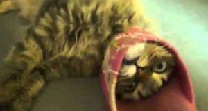 Kot w pułapce