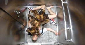 Gigantyczny psi pająk - polski filmik najpopularniejszy na YT