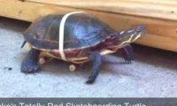 Żółw na deskorolce