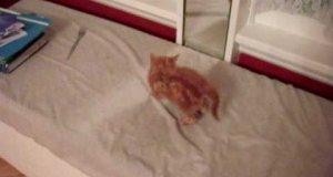 Mały kociak vs lustro