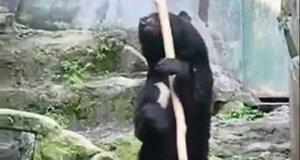 Kung fu miś