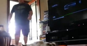 Wrestlingowa kara dla kota