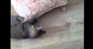 Szalony bieg kota