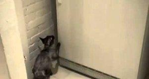 Kot Ninja zdobywa jedzenie