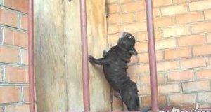 Pies, który dziwnie szczeka
