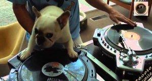 DJ Pies