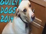 Psy, które mają wyrzuty sumienia